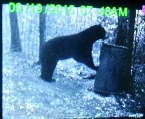 big bear bottom bait