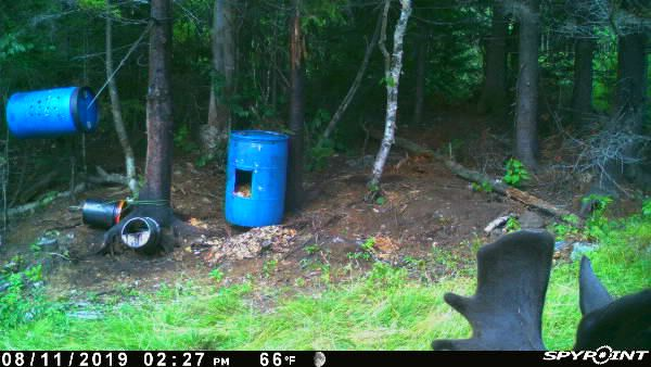Cellular Game Cameras – A New Way to Scout