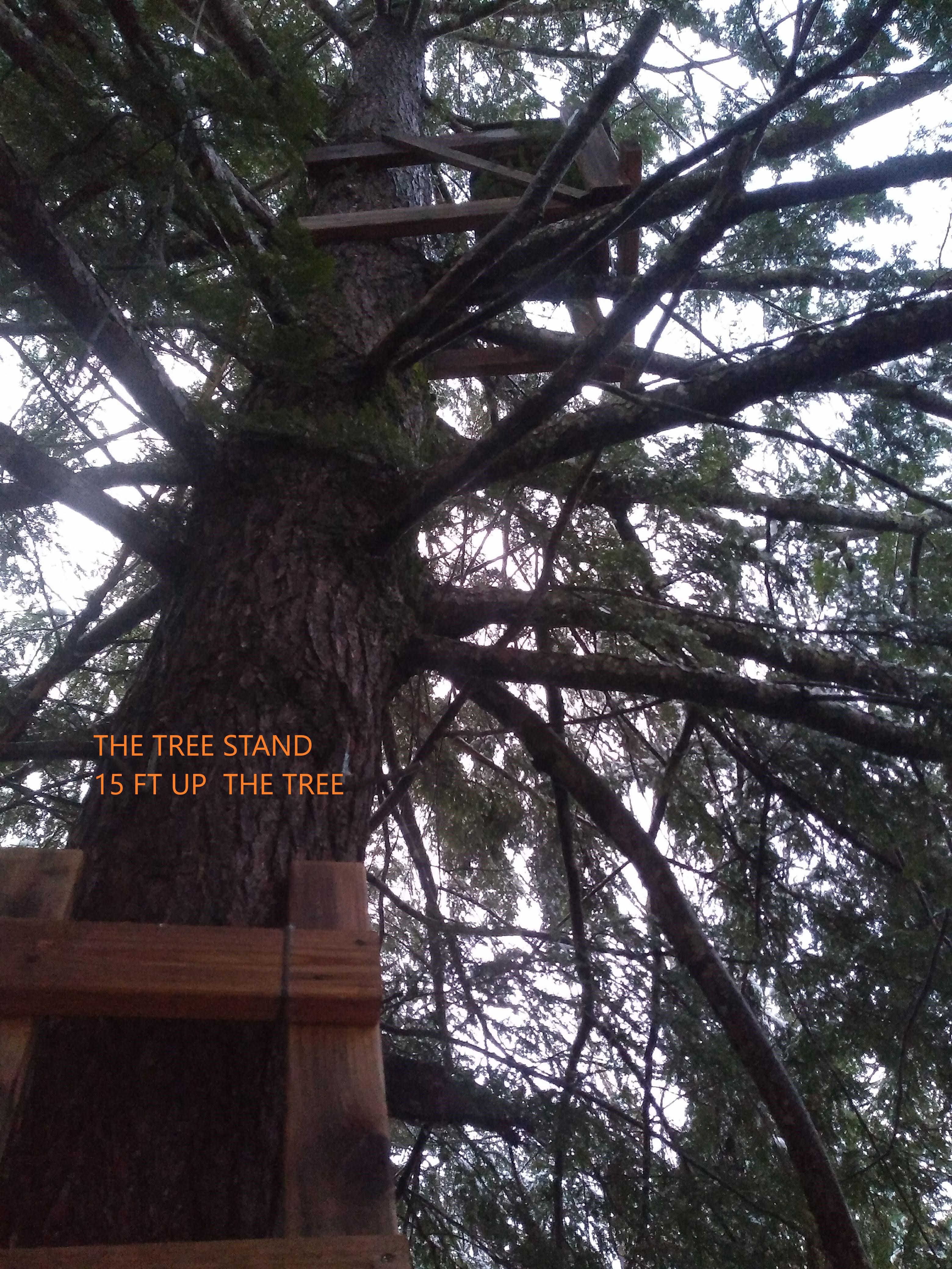 THE TREESTAND.jpg