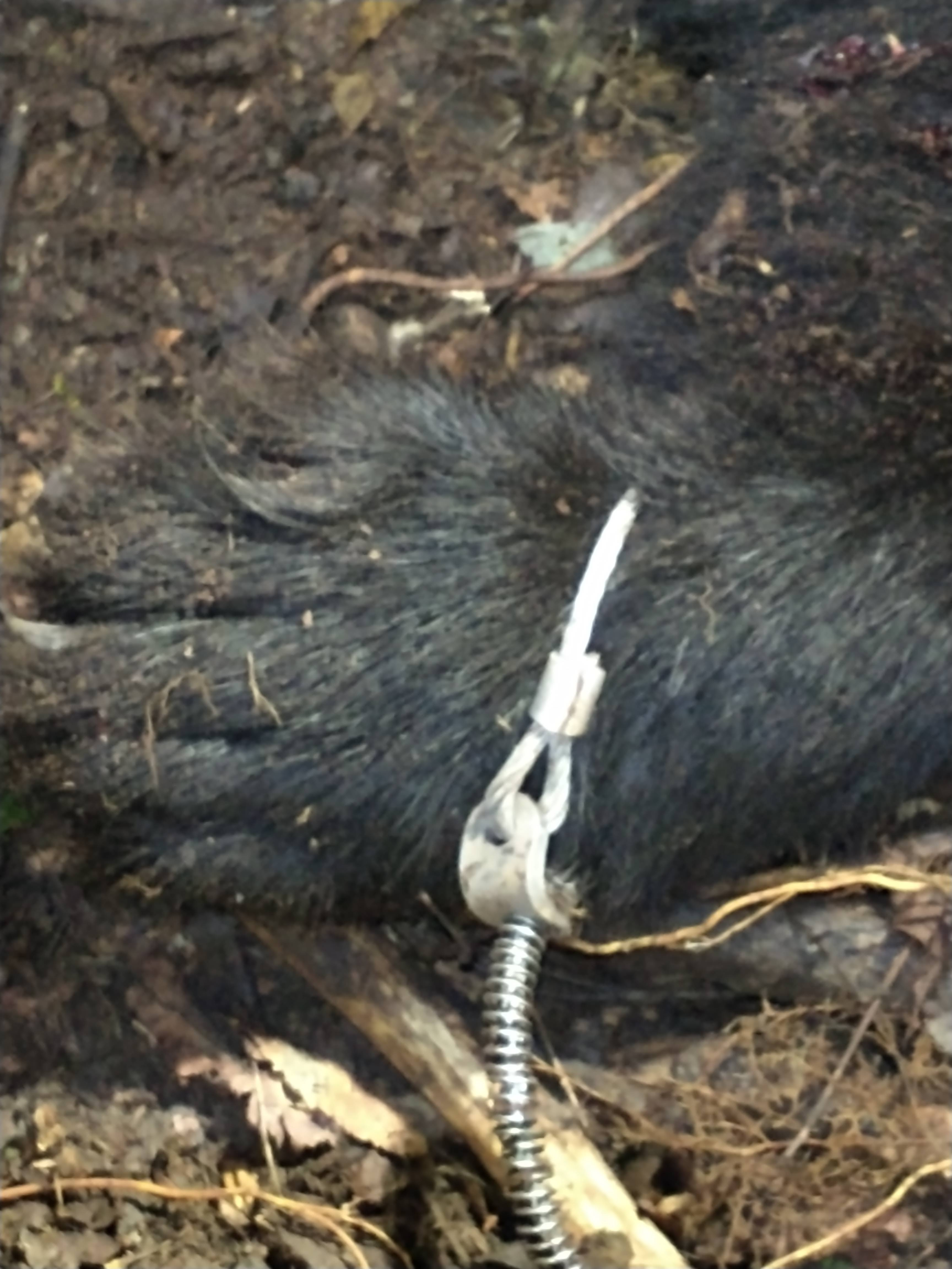 Mentoring Women Trappers Begins with Bear Trapping